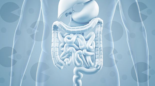 You may know about healthy bacteria called probiotics, but did you know they need to be fed? Get the inside scoop on prebiotics and probiotics here.