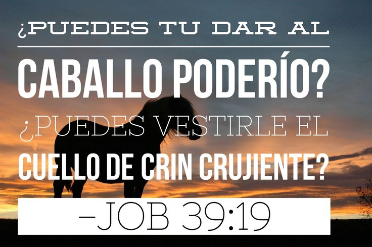 #Job #Biblia #Dios #Jehová #consejosbiblicos