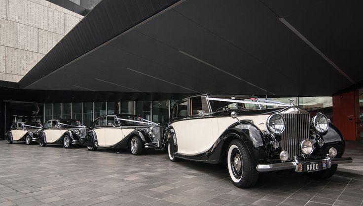 Our 1951 Rolls Royce Silver Wraith with 3 matching Jaguar Mk5 Sedans. #weddingcars #wedding #jaguar #rollsroyce #weddingday #weddingcarsmelbourne #classicweddingcars #bridetobe #weddinginspo #weddingcarhire #gettingmarried