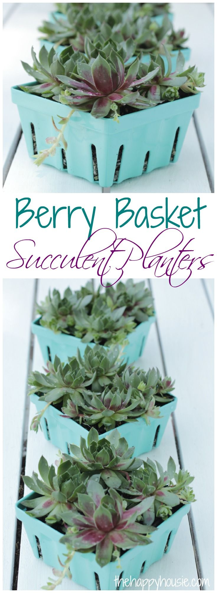Berry Basket Succulent Planters at thehappyhousie.com