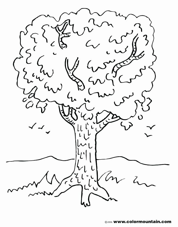 32 Tree Trunk Coloring Page Leaf Coloring Page Tree Coloring