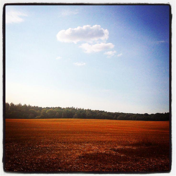 Fields forever