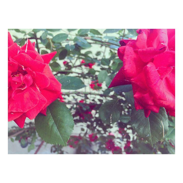 #roses #retro #self
