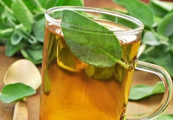 """Die heilende Wirkung von Salbei-Tee. Wie gut diese Pflanze ist, kann man bereits an ihrem römischen Namen feststellen. Sie hieß """"Salvia"""", von lateinisch """"Salvum"""", was """"Rettung"""" bedeutet."""
