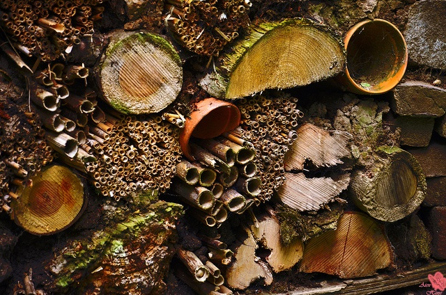 A giant 'insect hotel'.    All kinds of wood by Aienhime, via Flickr