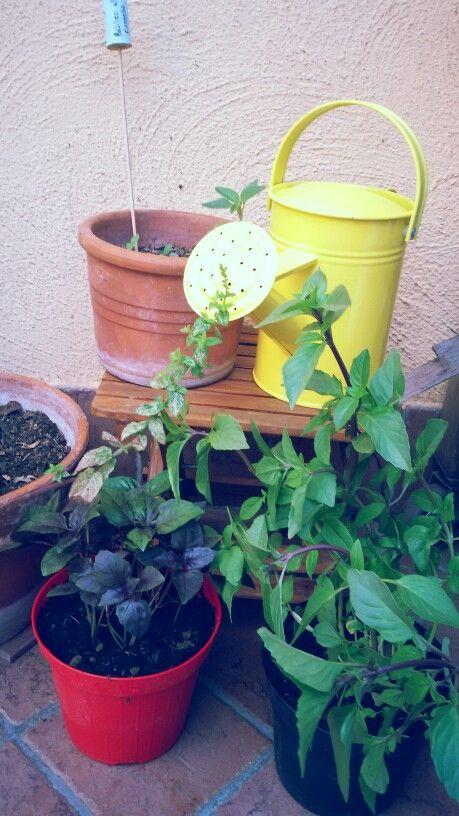 My lovely garden