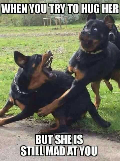 When I try to give her a hug when I realise I really did overstep the mark and I regret opening my God Damned mouth again!