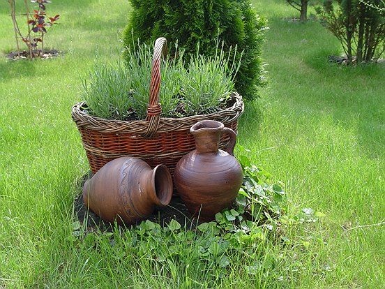 Rośliny i ogród, Mój wiejski ogród - Ciągle coś dodaję,coś wyrzucam,  uczę się metodą prób i błędów.Czasem natura sama dokonuje zmian, bo na przykład coś zmarznie, coś...