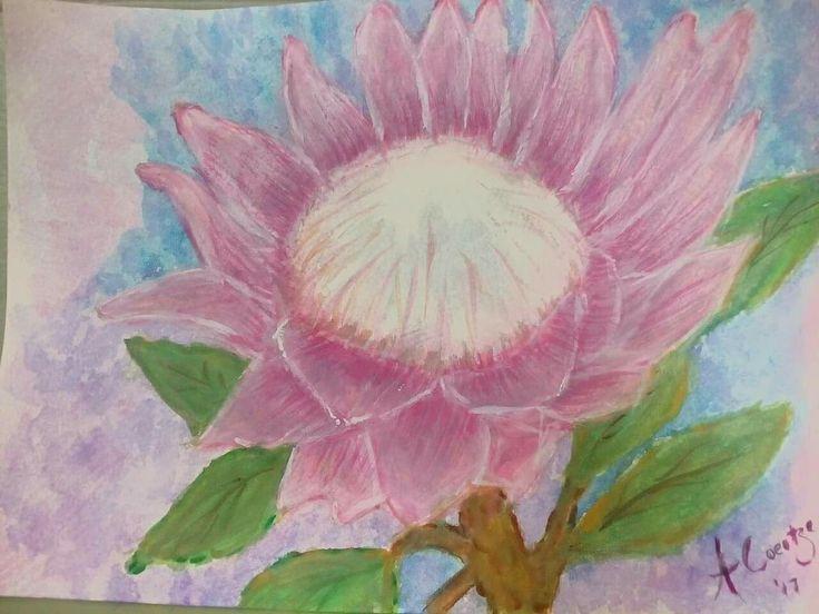 Protea watercolor...by Amanda Coertze '17