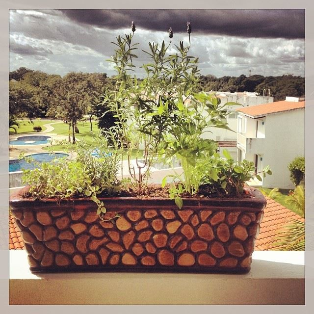 {#LifeStyle} #Foodie #trend we #LOVE: #growing your own #herbs and #spices #athome. This #planter bears #oregano, #rosemary, #lavander, #basil and #mint... and it's all readily available on the back #terrace! #playadelstyle #PlayadelCarmen #homegrown #garden #microgarden