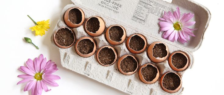 Egg Crate Garden – How To Plant An Egg Crate Garden | Free People Blog
