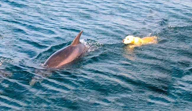 Dog And Dolphin Best Friend