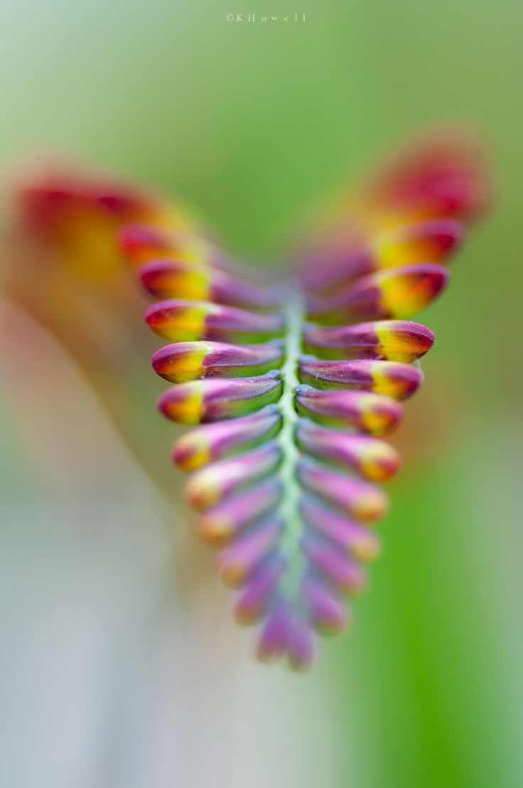 Close Up Portrait Of A: 17 Best Ideas About Close Up Photography On Pinterest