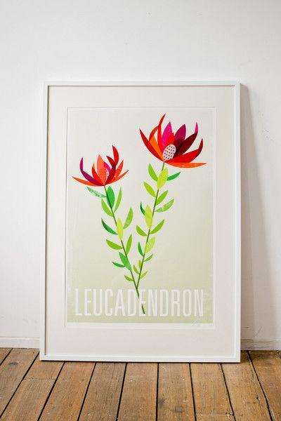 lara cameron   leucadendron