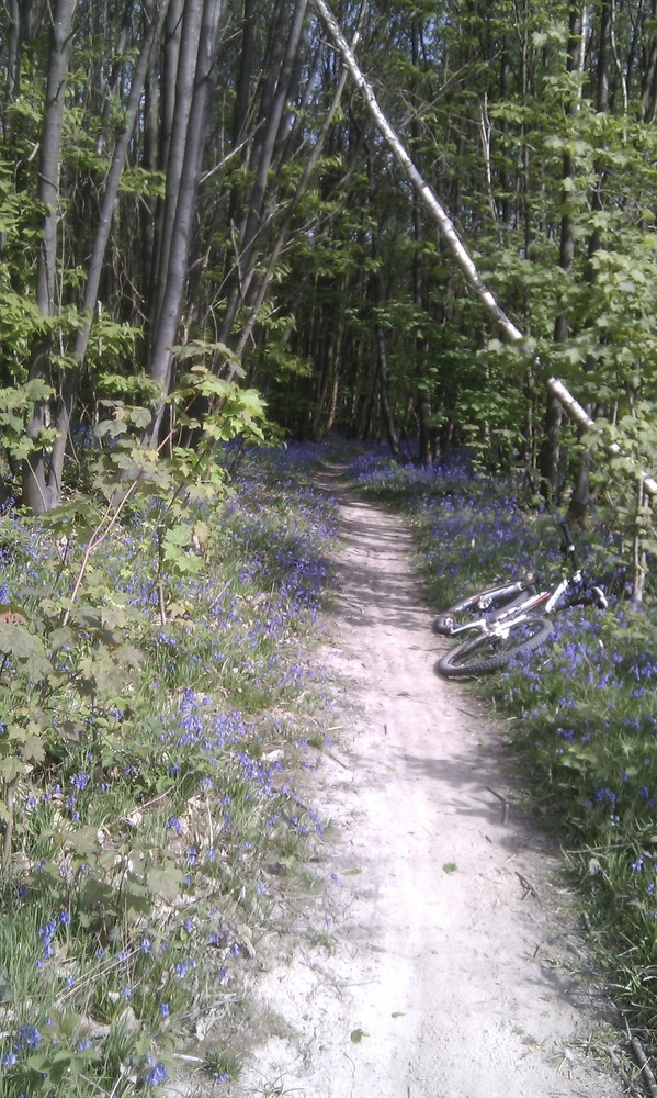 Bedgebury Forest's Red MTB Trail in Bluebell mode, spring 2011