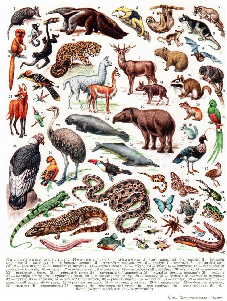 Лесные млекопитающие с картинками