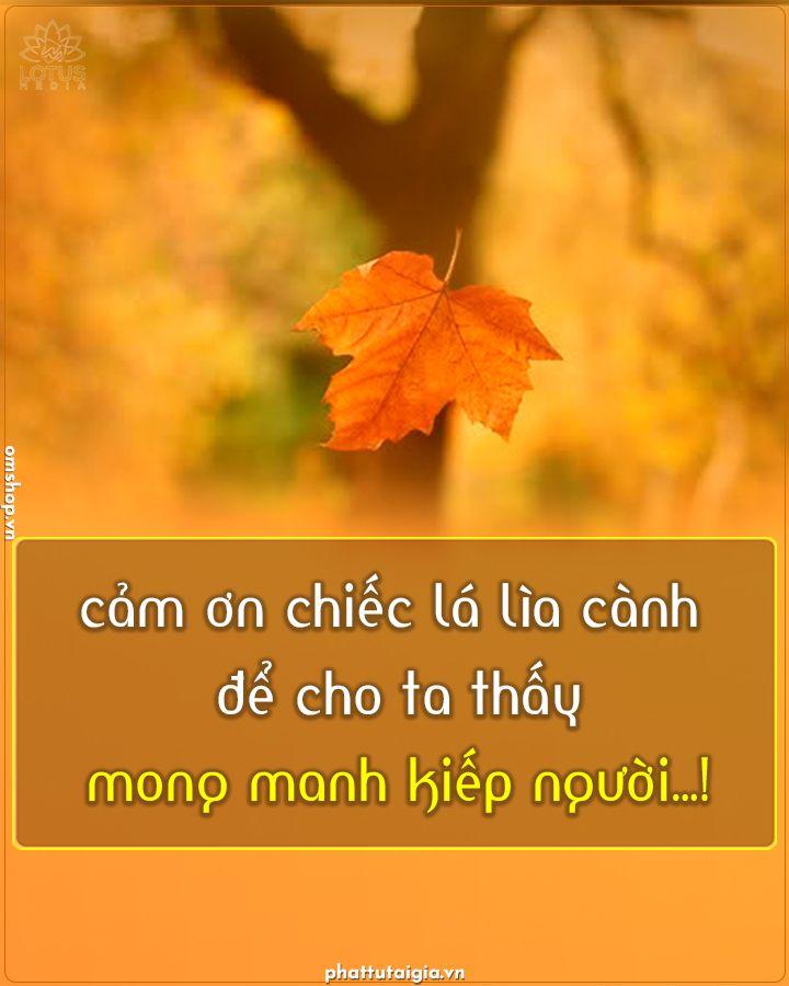 Cảm ơn Chiếc La Lia Canh để Cho Ta Thấy Mong Manh Kiếp Người Trong 2021 Cam Lời Trich Truyền Cảm Cam ơn