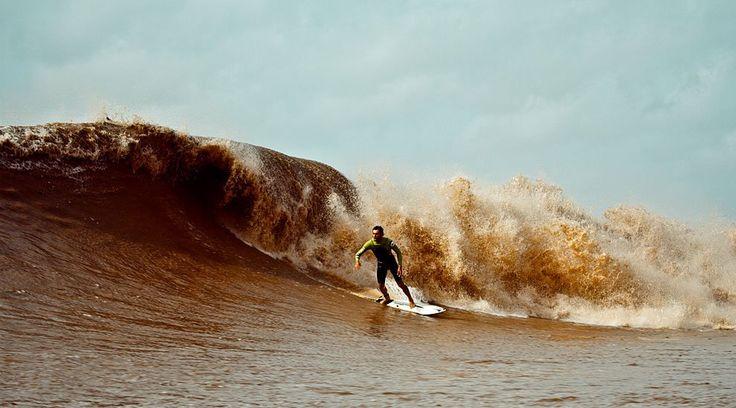 pororoca es una especie de maremoto surfeable que llega a viajar hasta 8oohm en el oceano Atlántico hasta adentrarse en el río Amazonas , aquí un srfista brasileño.