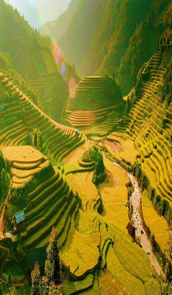 Rice terrace in Sapa, Vietnam