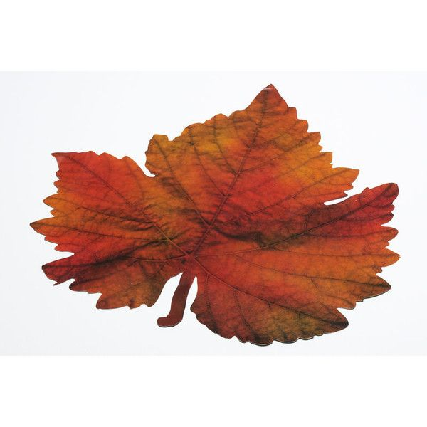 Fall Leaves Background ❤ liked on Polyvore featuring backgrounds, flowers, fall, autumn and fillers