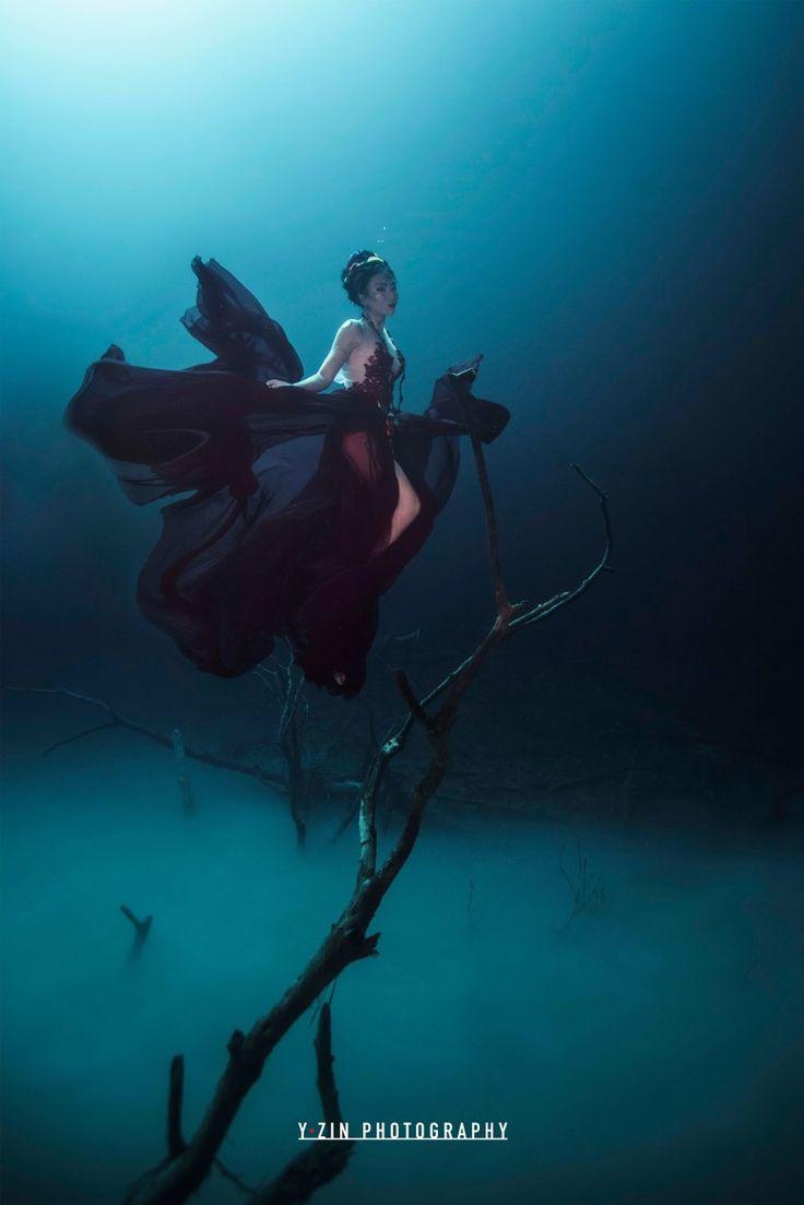 깊은 바닷속 '상어'를 찍는다? 국내 최초 수중사진작가 와이진 : 네이버 블로그