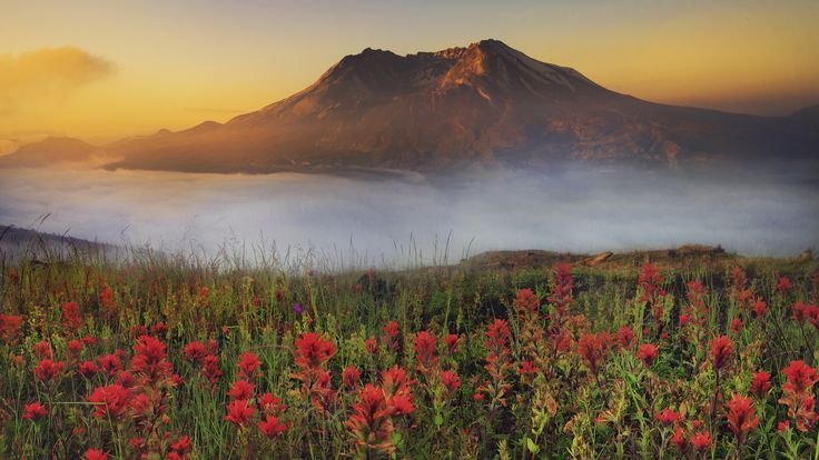 Mountain, smoky, flowers