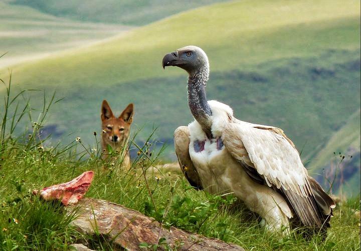 Vulture Cafe (KZN) - A fantastic spot for photographers.