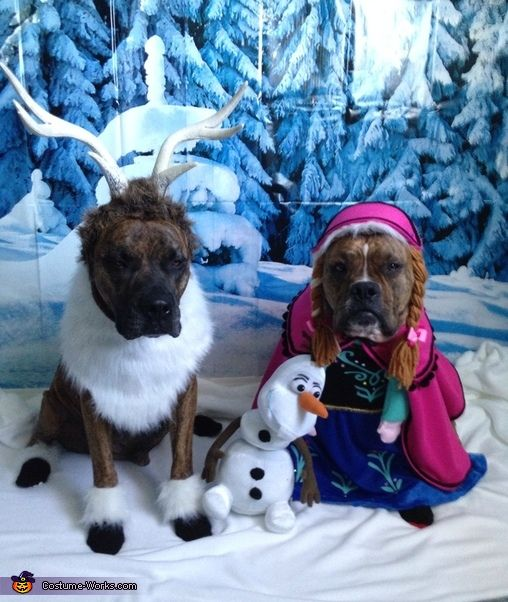 Frozen Dogs Halloween Costumes its okay dogs just let it go!!!!! ahahahahahah
