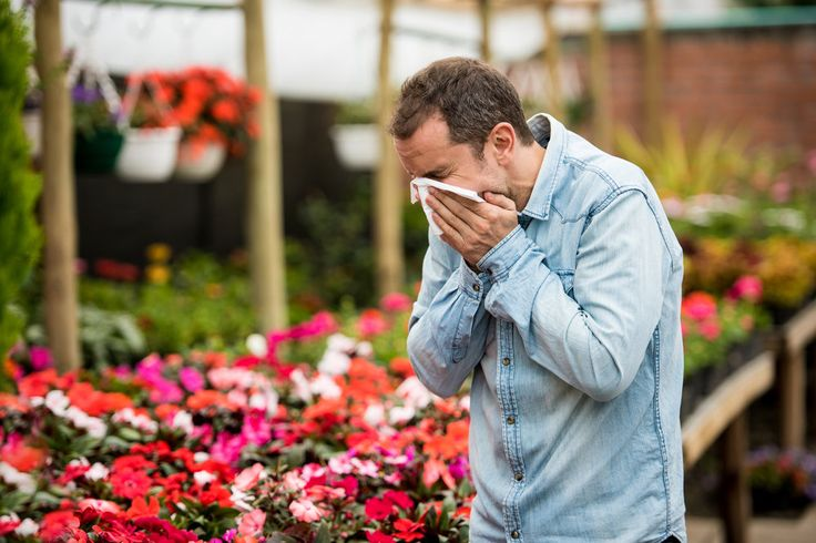 Spring is in the air, along with those pesky allergens- substances that can cause sneezing fits, runny noses, and itchy eyes. While there are many irritants that can trigger allergic reactions, such as food, medication, insect bites, and animals, seasonal allergies (allergic rhinitis, hay fever) are generally caused by wind-borne pollen.