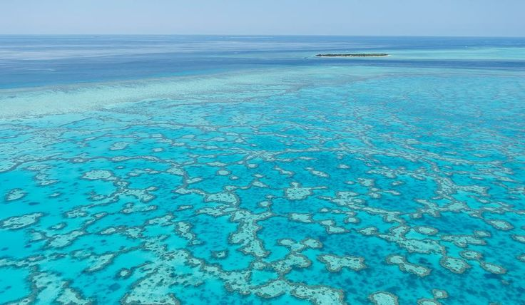 Heron Island Australia  City pictures : Heron Island in Australia | Haven't Been Everywhere... | Pinterest