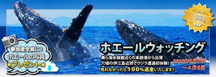 沖縄ホエールウォッチング アイランドクルー
