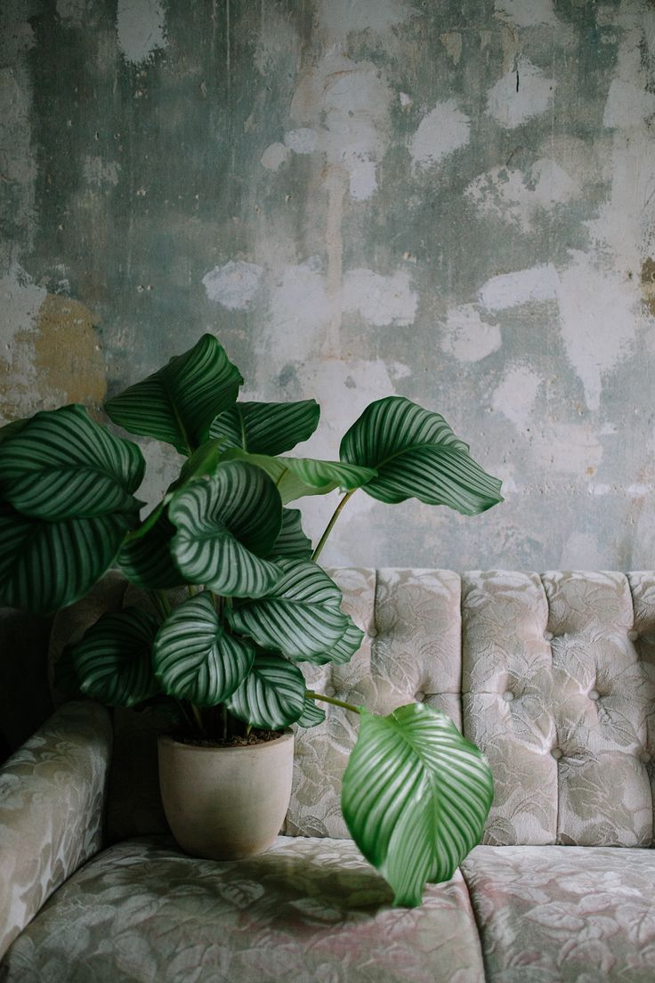 Diese Pflanze bringt Grün in die rustikale Atmosphäre des Raumes. #pflanzenfreude
