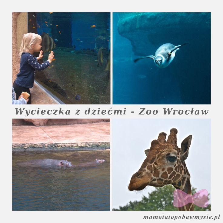 wycieczka-z-dziecmi-zoo-wroclaw-1