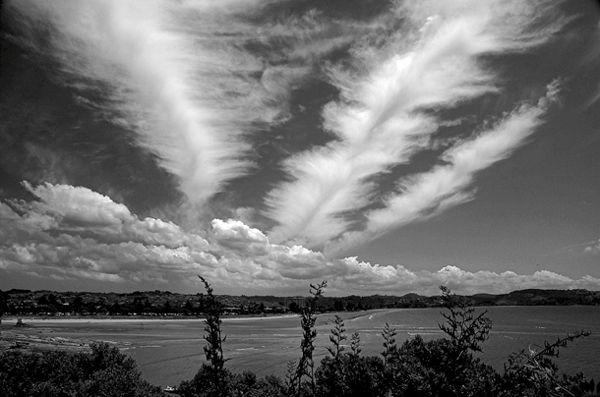 Three feathers floating over Orewa, New Zealand.