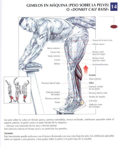 Ejercicios Gym para trabajar piernas con una guía en imágenes para implementar bien una rutina en el gimnasio, si no sabes nada de como ejercitarte y leva..