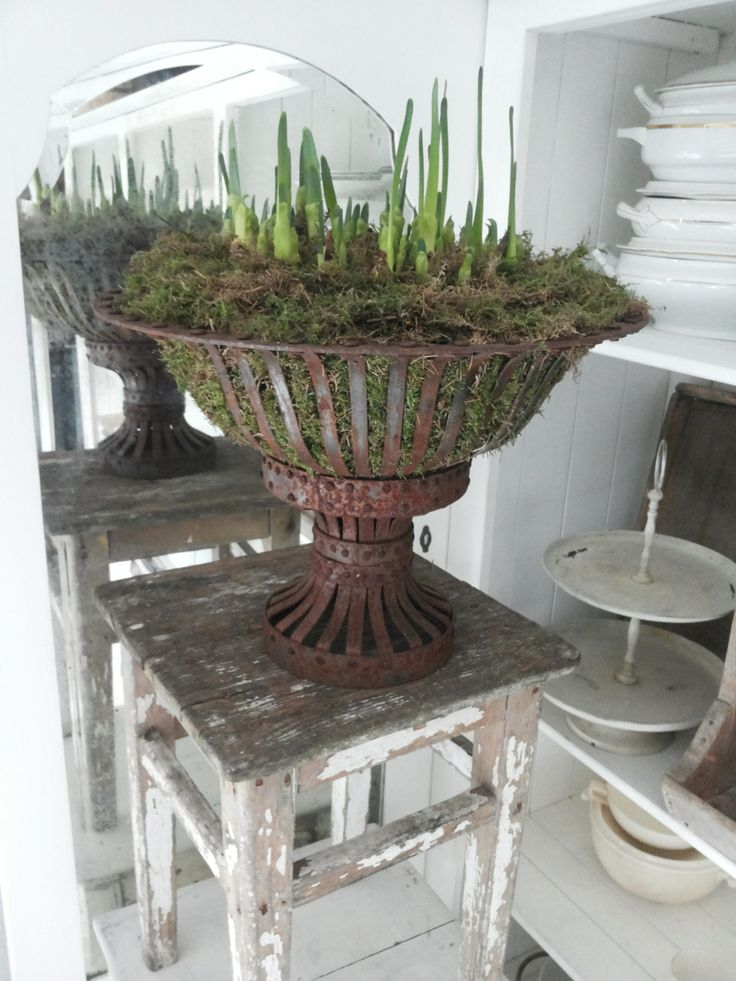 What a cool planter!!!  It looks like an old lighting fixture.  www.rehouseny.com