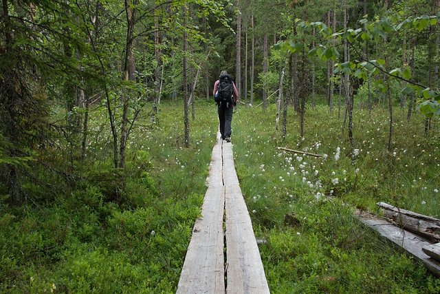 Hiking in Seitseminen National Park Finland #finland #nationalpark More on our blog at http://www.hikeventures.com