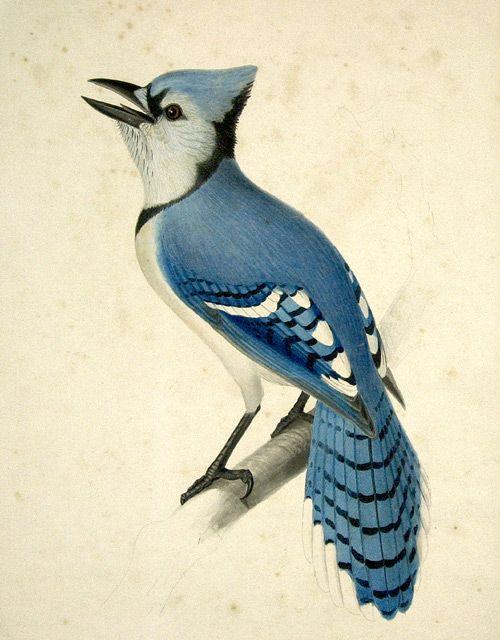 Vintage bird prints for table names