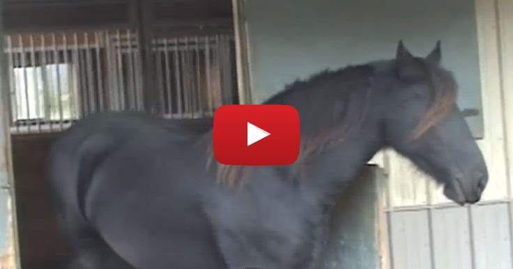 Our Horse Kept Disappearing, So We Set Up A Camera To Find Out Why... Now We Know!!