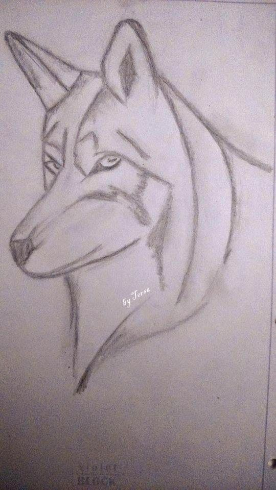sketches, wolf looking through your soul