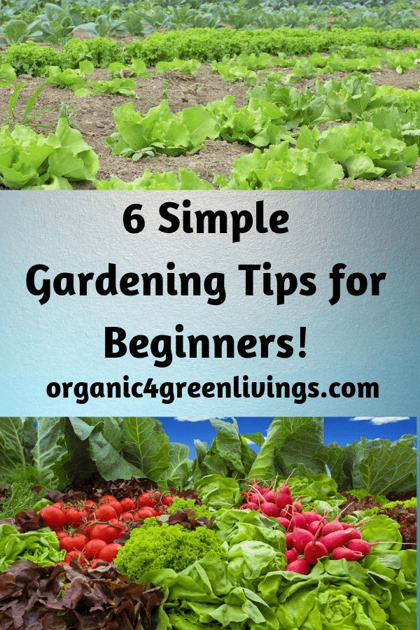 Simple Gardening Tips and Tricks For Beginners