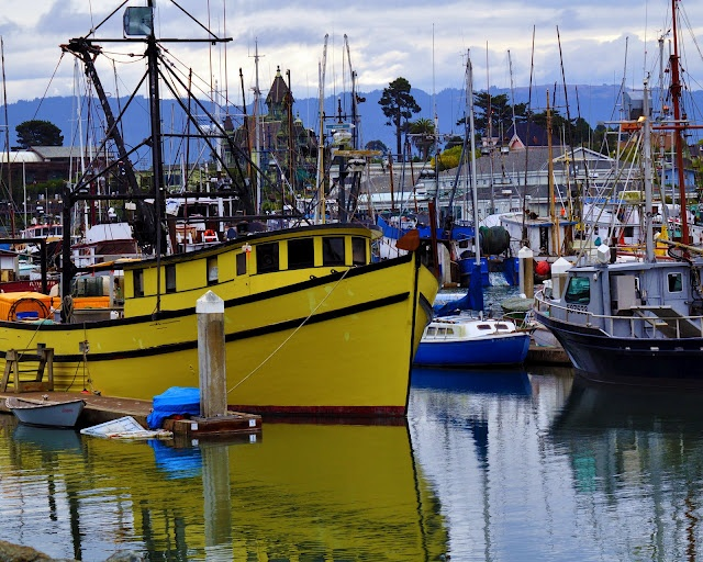 93 best images about west coast on pinterest la jolla for Eureka ca fishing