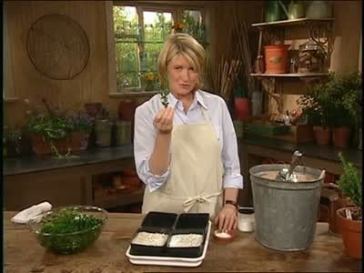 Martha Stewart teaches how to propagate cuttings of boxwood for your garden.