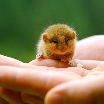 Baby chipmunk! It's too adorable! my house would be 1000% happier with a baby chippie!!!!