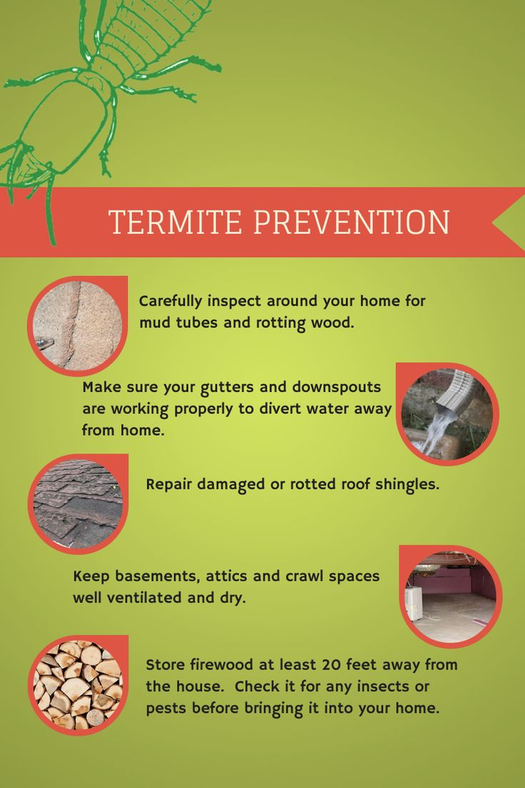 7 Best Images About Termites On Pinterest We Home And