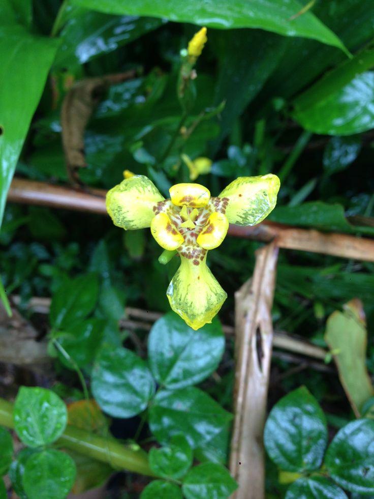 229 Best Tropical Caribbean Flowers Plants Flora Images