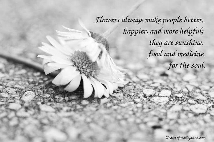 #quote #flowers #fotografin #love #kiss #happy #mood  #sunshine #soul #art #kunst