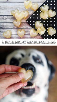 DIY Dog Treats   {RECIPE} Healthy Gummies for Dogs: Scratch + Shortcut   Make deliciously healthy homemade bone broth gummy treats or take a super quick shortcut with healthy homemade gelatin gummies for dogs. Yum!