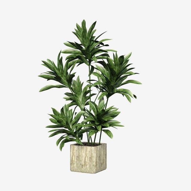 Square Ceramic Flower Pot Green Plant Plant Clipart Square Ceramic Png Transparent Clipart Image And Psd File For Free Download Cvetochnye Gorshki Derevyannye Cvety Rasteniya