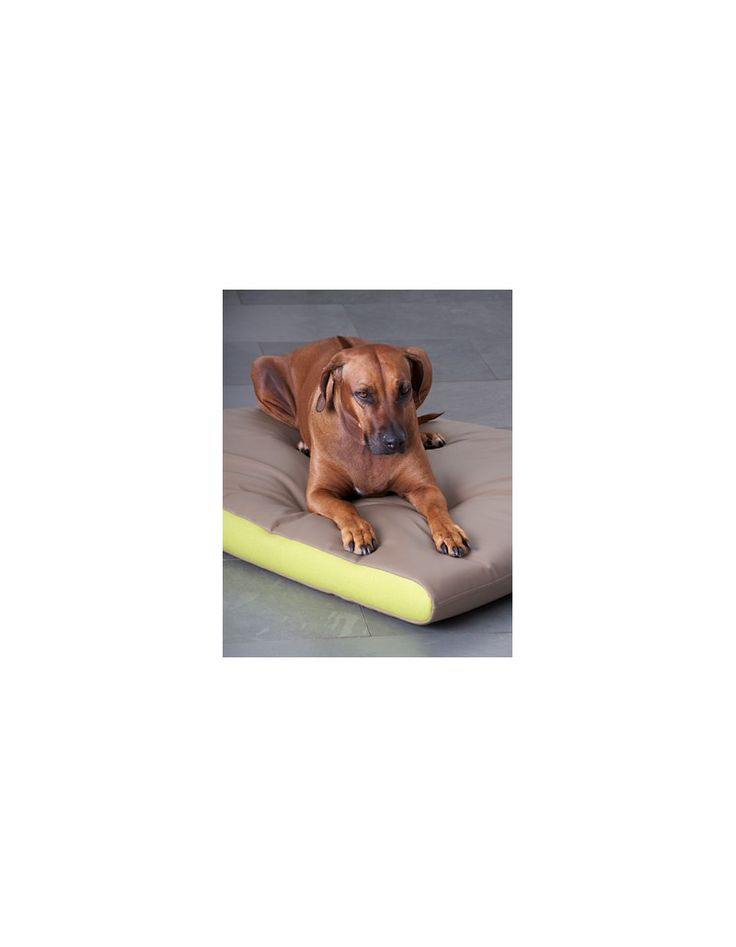 Les matelas PETER en mousse à mémoire de forme offrent une position naturelle et saine. Il soulage les articulation et les muscles, s'adoucit avec la chaleur lui permettant de s'adapter au poids et à la taille du chien. De plus il aide le flux sanguin et favorise un sommeil sain, profond et détendu.  Existe en 24 combinaisons de couleurs et 2 tailles.